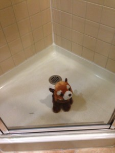 We smuggled this red panda out of the zoo and hid him in motel shower!